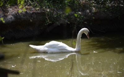 Légendia parc